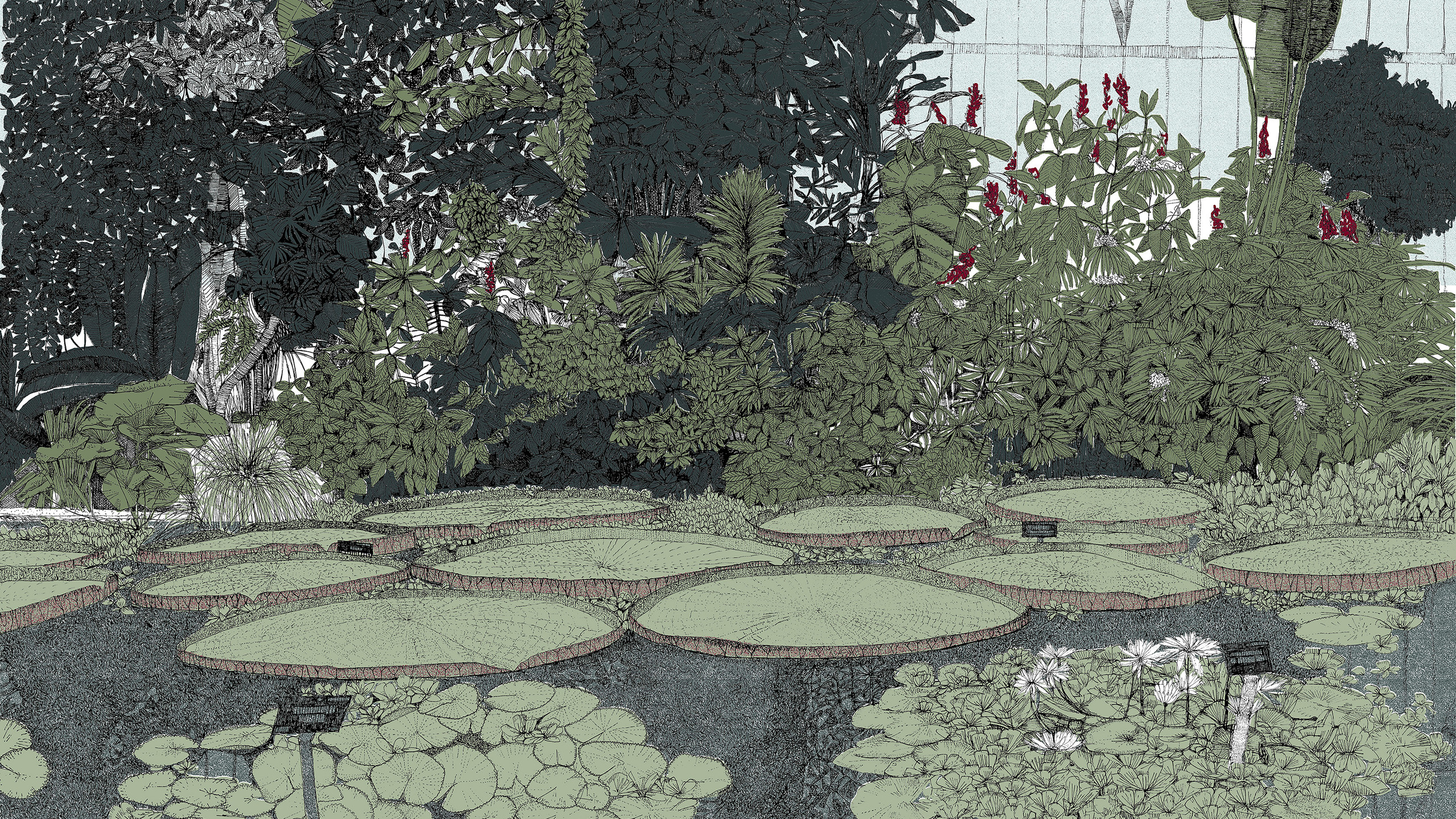 What_a_waterlily,_6_colour_screen_print,