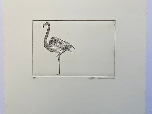 Flamingo, etching