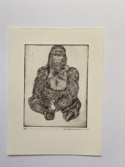 Gorilla, etching