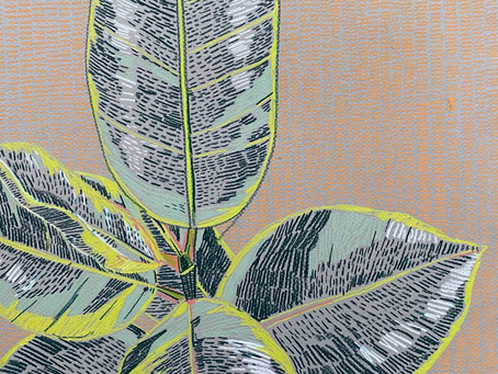 Original 'Rubber Plant Study' drawings are now available at Print Club London