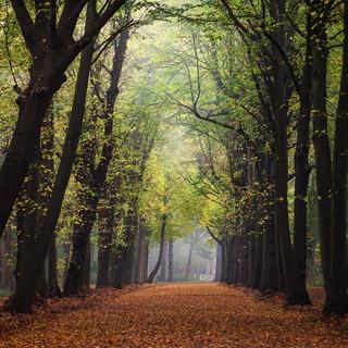Domburgse bos