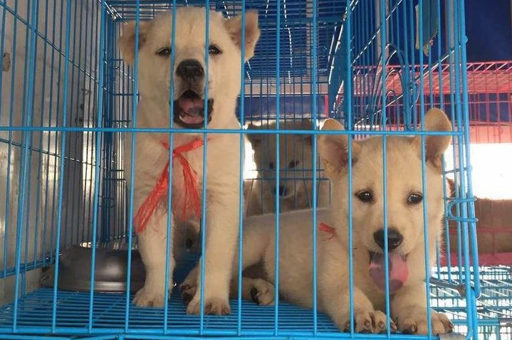 China continues reforms in wake of coronavirus crisis: confirms dogs are pets not meat; Wuhan, Beijing ban eating wildlife