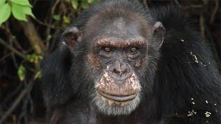 Rooney and Kate Mara Visit Chimpanzees in Liberia