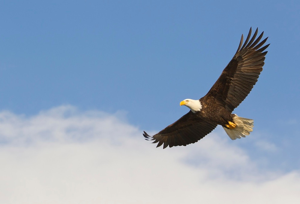 The Endangered Species Act is in its own fight for survival; help us save and strengthen it