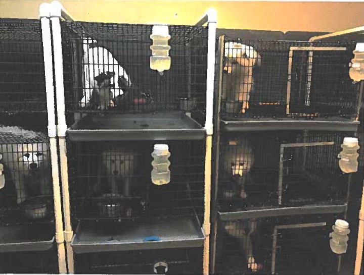 Horrible Hundred report leads to closures of problem puppy mills in states, spurs new laws in states, localities