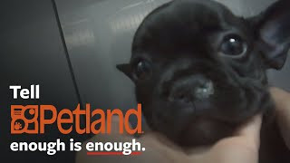 Shocking undercover investigation at Petland!
