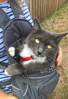 cat in front carrier