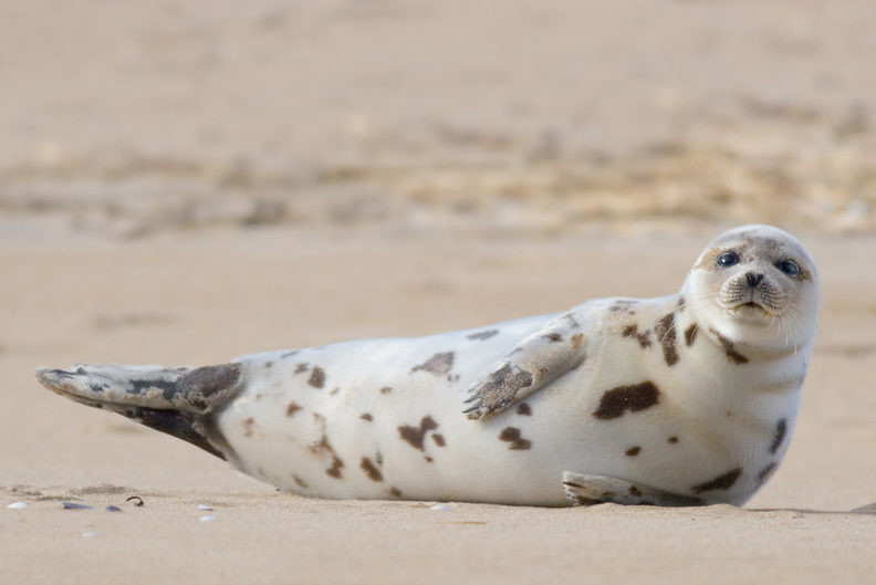 Scotland bans fish farmers from shooting seals; law inspired by U.S. reforms for marine mammals