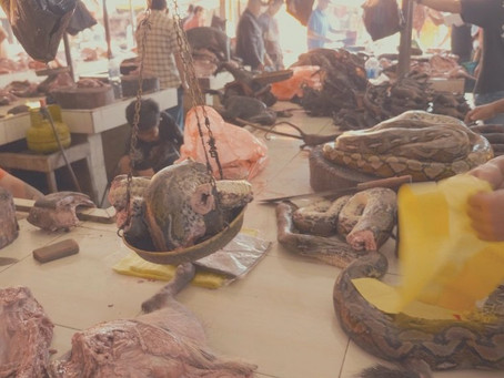 World Health Organization says nations should end wildlife trade