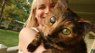 Cat Rescued from 700-Cat Hell