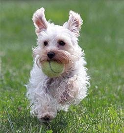 dog_tennisball