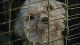 Game-Changer For Puppy Mills