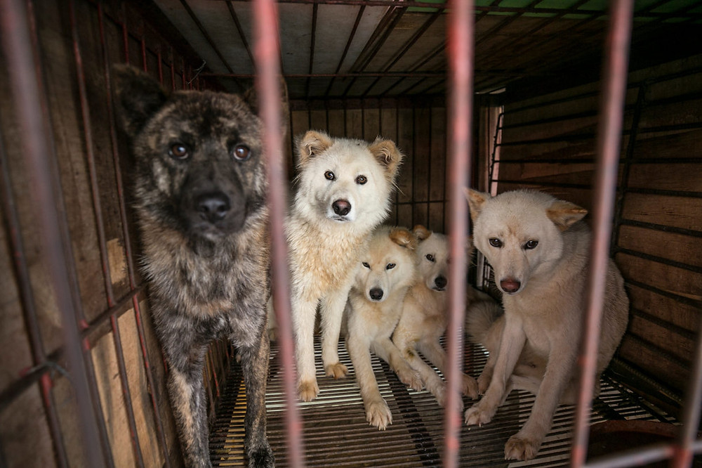 China's recognition of dogs as companion animals bodes well for its animal welfare future