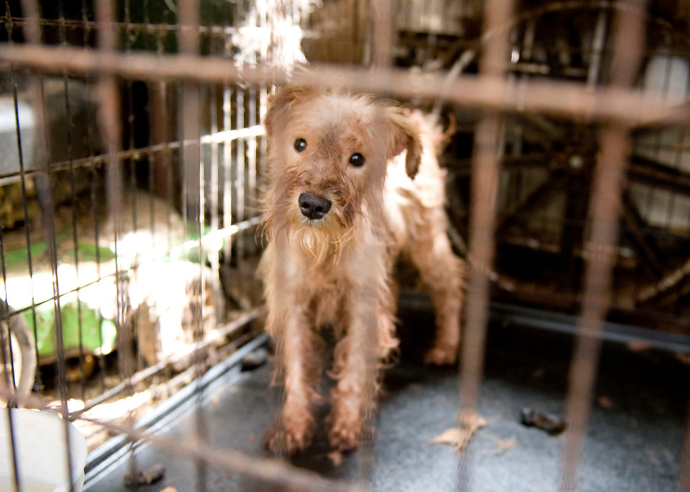 Breaking news: USDA finalizes reforms for animals in puppy mills, roadside zoos and research labs, but will it enforce them?