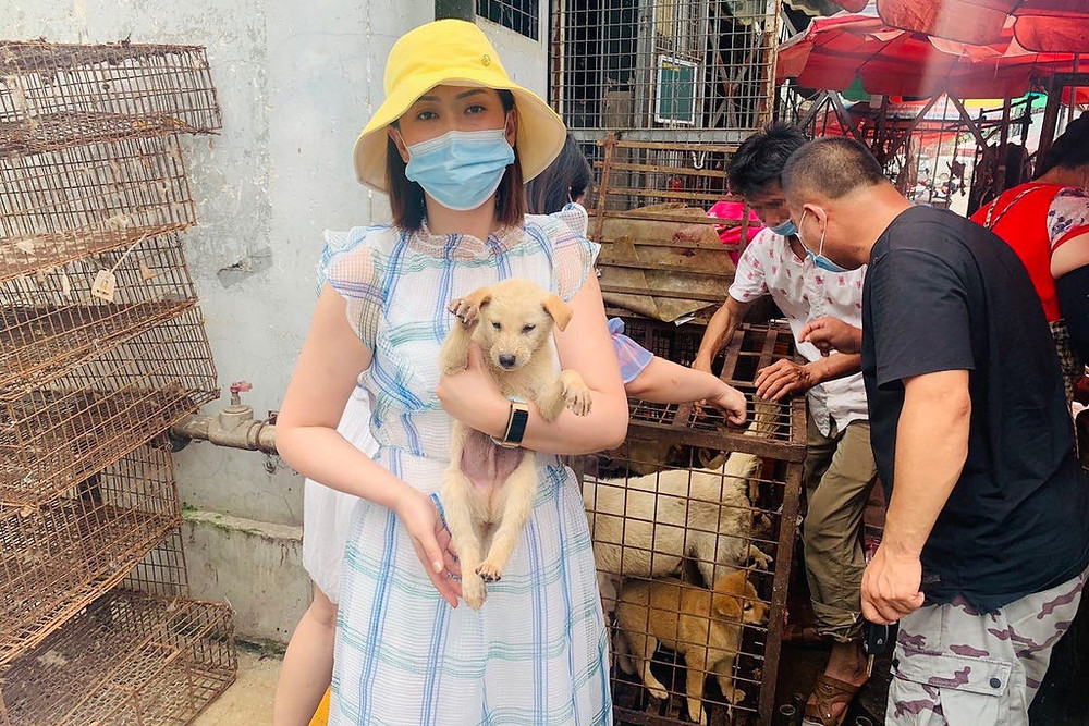 Yulin dog meat festival to begin this weekend, defying Chinese declaration that dogs are pets not food