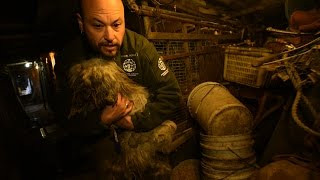 55 dogs rescued from the darkness of hidden dog meat farm