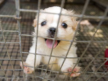 Missouri moves to shut down Horrible Hundred puppy mill for keeping dogs in filthy conditions