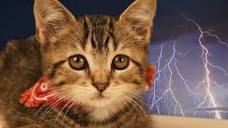 How to Prepare a Pet for Disaster