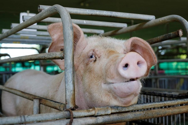 As slaughterhouses continue to spread coronavirus, plant-based foods are a safe, humane alternative
