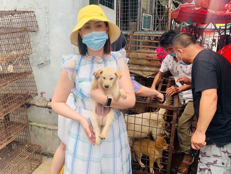 Yulin dog meat festival to begin this weekend, defying Chinese declaration that dogs are pets not fo