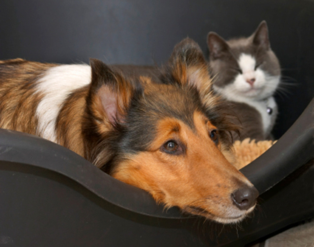 Veterinarians address pet owners' concerns about the coronavirus