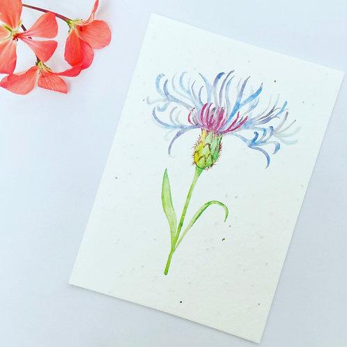 Plantable Seed Card - Centaurea Flower