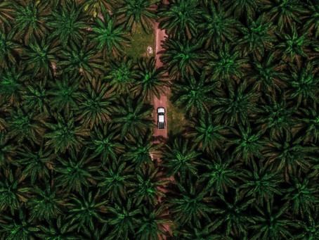Palm Oil: Why It's Harmful and How to Avoid It