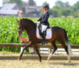 FS No Doubt, étalon poney disponible pour vos juments, pour produire des poulains orientés dressage et complet