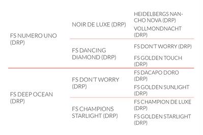 Origines FS Next Diamond, étalon Deutsches Reitpony