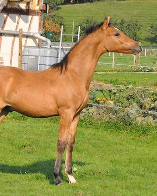 Bailey's Alizay, poney de Dressage, France