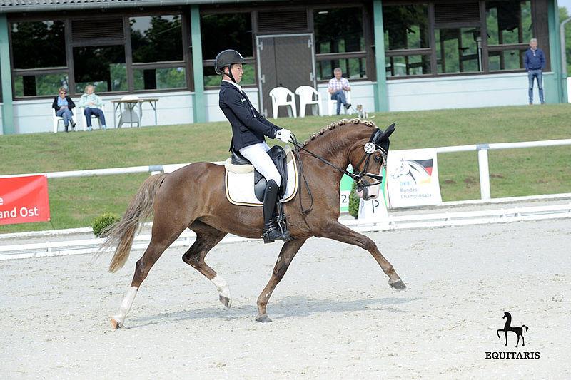 Top Queen H (Top Anthony II), poney de dressage allemand, Deutsches Reitpony, German Riding Pony