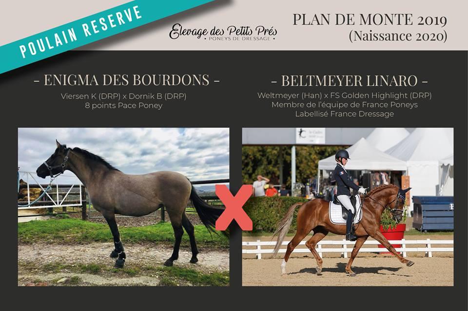Poulain par Beltmeyer Linaro, poney de dressage, réservé in utero