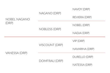 Origines Nobless Vaness, jument DRP