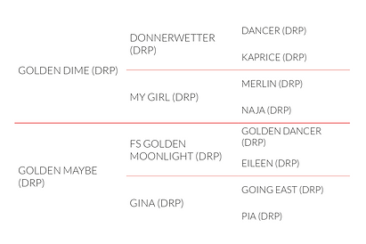 Origines de l'étalon DRP DIamond Touch NRW, poney de dressage allemand