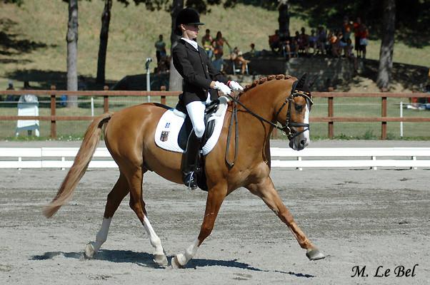 Dornik B, 8 fois champion d'Europe Dressage poney