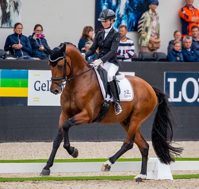 Valverde se classe 4ème des championnats du Monde des 5 ans à Ermelo. Distribué en France par La Collection Etalons de Dressage.