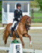Embryons poulains poneys de sport à réserver