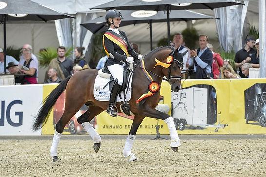 Cosmo Callidus NRW, étalon poney, champion d'Allemagne en dressage