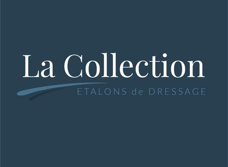 Création de La Collection