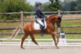Beltmeyer Linaro est un étalon poney de dressae, membre de l'équipe de France Poneys