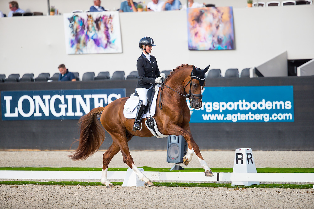 So Unique, champion du Monde des 4 ans 2019 à Ermelo, est distribué en France par La Collection Etalons de Dressage