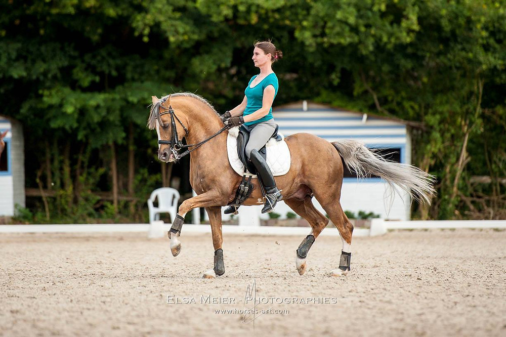 Champion Suprême d'Eté, Etalon agréé PFS, poney de dressage en France