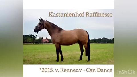Vidéo de Raffinesse, poulinière Deutsches Reitpony, poulains à vendre