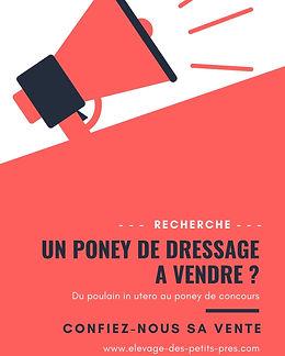 UN PONEY DE DRESSAGE A VENDRE _.jpg