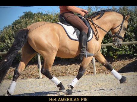 Hesselteichs American Pie Elite CC 5 ans et labellisé !