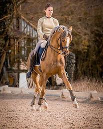 Champion Suprême d'Eté, étalon poney de dressage, DRP, palomino