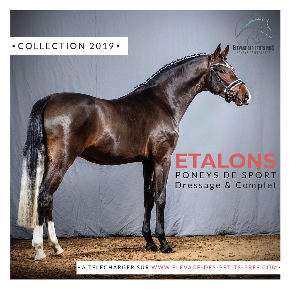 Catalogue des Etalons Poneys de Sport 2019