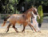 Ello Kitty Alizay, Championne de France Foals Saumur 2014
