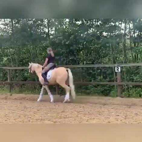 Vidéo de Daily Dancer