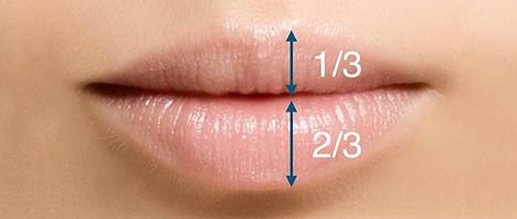 proporção labios.png